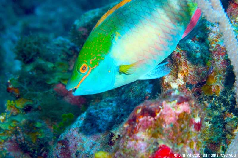 Ambergris Caye, Belize 2005