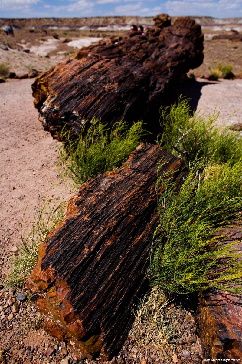 Petrified Forest Nat'l Park